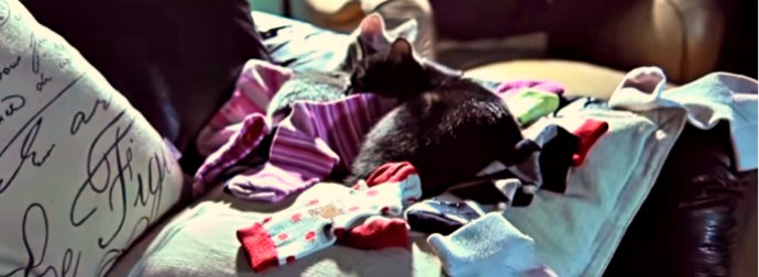 Why Do Cats Lie On Our Clothes? The Truth May Surprise You (In A Nice Way)!