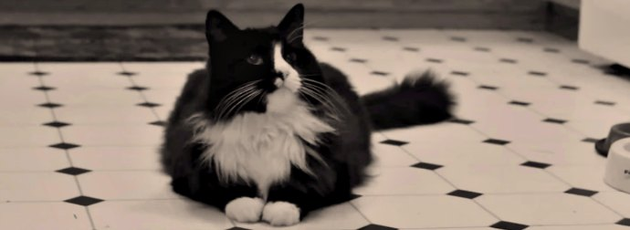 Henri the French-Speaking Cat Shares His Less-than-flattering Opinion of Art and Paintings