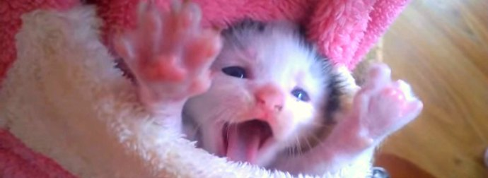 Adorably Cute Pocket Kitten Snuggles & Stretches Inside A Tiny Pink Santa-Suit Pocket