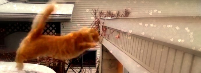 This Hilariously #EPIC Cat Video Compilation Will Have You Laughing For Days