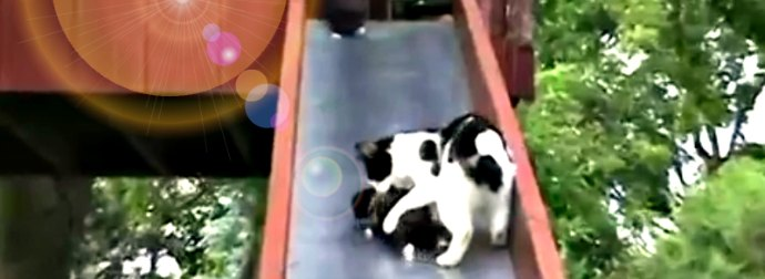 Watch Little Kittens Sliding Down A Park Slide... And A Frustrated Mama Cat Trying Taking Them Back To Safety