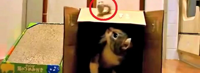 Cat Rejects Expensive Scratch Pad Toy And Instead Plays With A 2$ Catnip Squirrel. Hilarious!