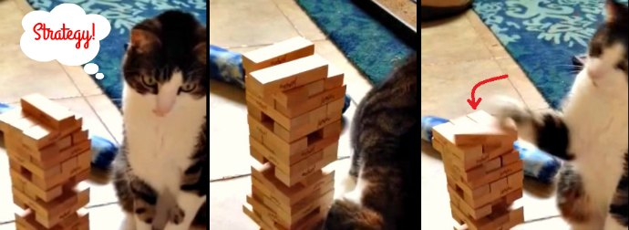 Strong And Smart Cat Plays An Incredible Game Of Jenga. Watch!