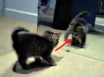 When This Kitten Sees His Own Reflection In The Mirror, His Reaction Is Hilariously Crazy... and Cute!