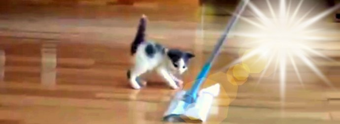 Swiffer Duster Lady Cleans And Mops Floor When Her Kitten Comes And Tries To Ride The Duster