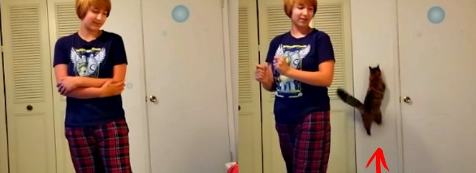 """Cat Puts An End To His Mom Doing A Horrible Performance Of Disney Song """"Let It Go"""""""