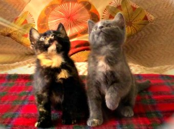 "Watch 2 Cute Kittens Head-Bop To DJ Snake & Lil Jon's ""Turn Down For What"" Song!"