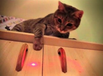 Amazing Compilation Of Cats Chasing, Playing With, And Dancing To, Laser Lights.