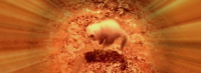 Himalayan Kitten Jumps Up And Down When Her Evil Cat-Mom Keeps Pulling The Carpet From Underneath Her Paws