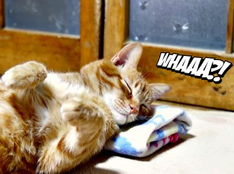 The Way This Cat Falls Asleep, Will Make You Feel Calm And Melt Away All Your Stress