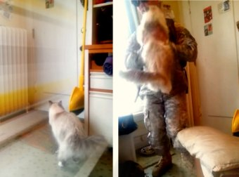 Iraq War Returns Home From Battle To His Cat Going Nuts Over Him. So Adorable. Just Watch It!