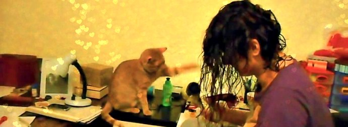 20 Hilarious Compilation Of Cats Battling Their #1 Enemy, The Hair Dryers.
