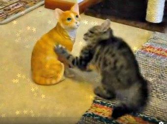 Kitten Attacks A Ceramic Orange Tabby Cat Thinking It's A Real Cat.