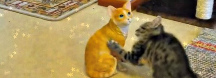 Kitten Attacks A Ceramic Orange Tabby Cat Thinking It's A Real Cat.