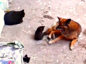 10 Months Later, Mama Cat Takes Her Kittens To Meet An Old Friend... A Dog!