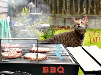 """Help 1 Million Cats Get A Free Meal By Doing Nothing Except Watch This """"Summer Time"""" Cat Video"""