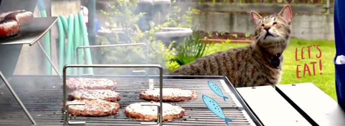 "Help 1 Million Cats Get A Free Meal By Doing Nothing Except Watch This ""Summer Time"" Cat Video"