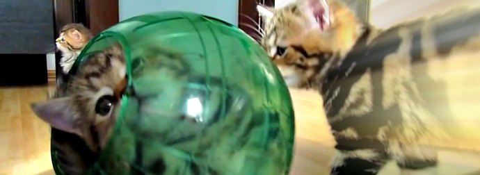 Kittens Steal The Hamster's Ball And Play With It Non-Stop, Because Why Not, Right?