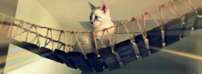 Cat Walks Bridge Like Indiana Jones In The Temple Of Doom Movie