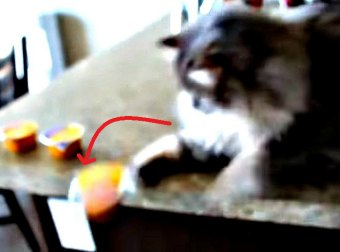 Watch 22 Cats Knock Stuff Over In This Hilarious Video Compilation.