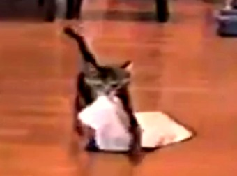 Japanese Man Trains His Kitten To Play Fetch With The Common Household Towel