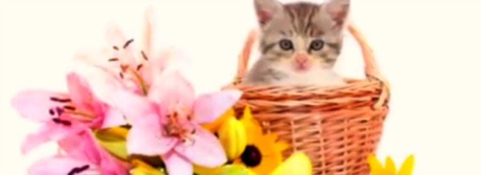10 Houseplants And Fruits That Could Kill Your Cat. Plus, How To Keep Your Cats And Kittens Safe
