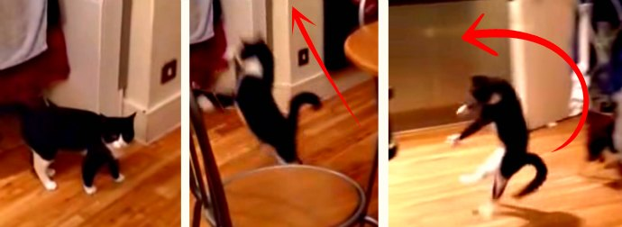 Cat Does A Weird Walk-Hop-Jump-Bounce Move 18 Seconds Into This Hilariously Viral Cat Video