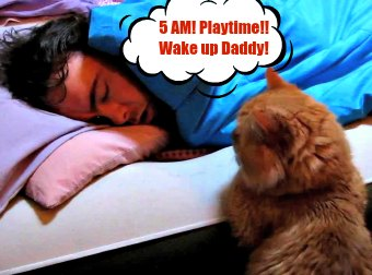 Cat Wakes Up His Cat-Dad At 5AM In The Mostly Adorably Cute Way So He Can Play