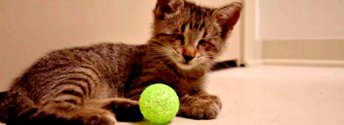 Blind Kitten Receives His Very First Toy And Goes Nuts Playing With It