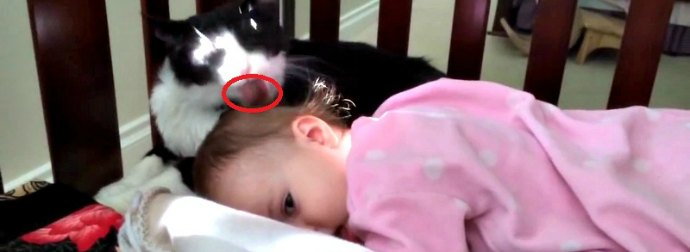 Cat Thinks Baby Is Her Kitten And Start Grooming Her With A Spit-Shine Treatment