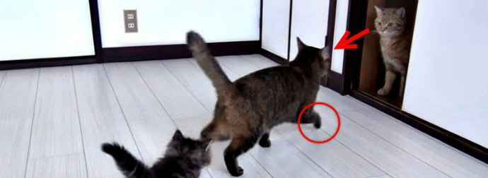 Hiss or Kiss? Watch 10 Cats And Kittens Meet For The Very 1st Time!