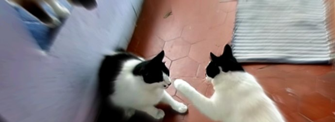 2 Nearly Identical Twin Cats Argue, Then Fight. Watch How It Went Down!