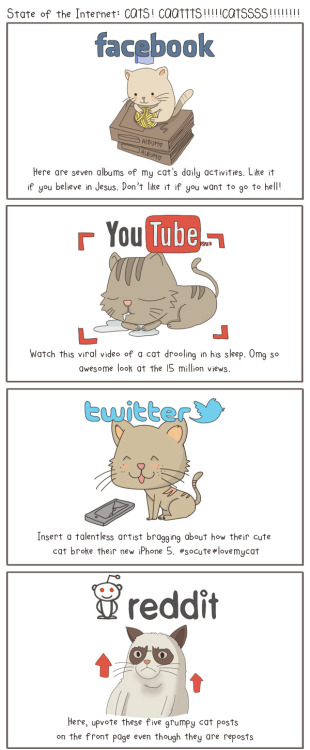 state of internet cats devin bosco le tumblr infographic pic