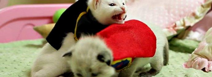 These 2 Kitten Starring in The Batman Vs Superman Movie Will Melt Your Heart