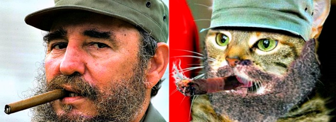 Fidel Catstro? Kitty Counterpart Of Brutal Cuban Dictator Appears On The Internets.