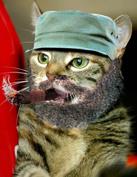 fidel catstro dictator cat portrait