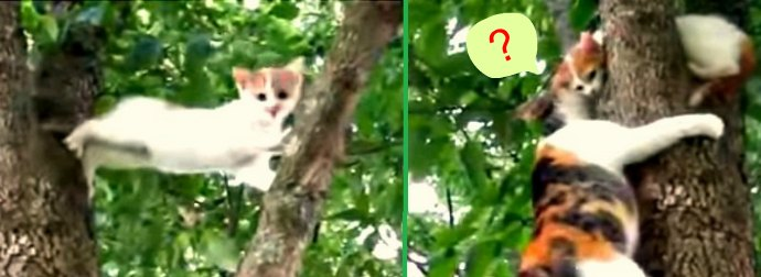 Training Day? Watch Mama Cat Whisper Instructions To Baby Kitten Stranded On Tree Top.