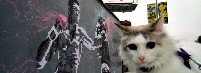 #MeowhammadAli Day? Cats Around The World Relive Their Best Fights To Honor The Greatest