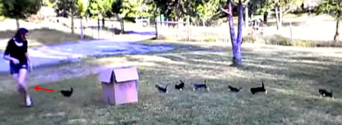 When They Heard About The Kitten Film Festival, These 13 Kitten Performed Something Really Cool!