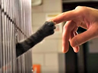 Yep. This Cute, Heart-warming Rescue Kittens Ad Will Make You Come Home With A Dozen Kittens!