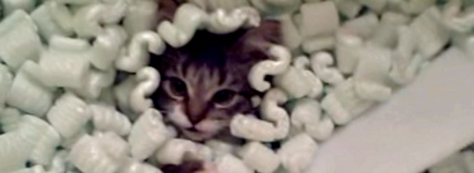 Upset At The Styrofoam Ban, This Kitty Cried All Night. So His Cat-Mom Let Him Swim 1 Last Time.