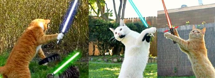 Watch These Jedi Cats Celebrate #MayThe4th StarWars Day