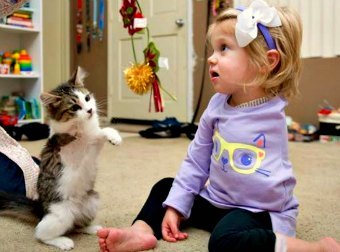 Kitten and Baby Girl Bond Together After Surviving a Common Loss