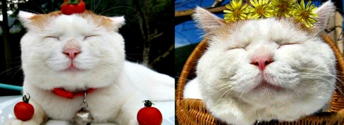 They Call Him The Most Zen Cat Ever! Here's Why.