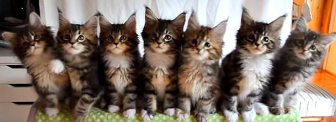 Purr-fect rhythm? These 7 Cute Kittens Move In Perfection Unision, Then #BreakTheInternet AWWW!