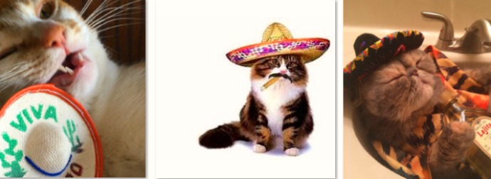 Watch Cats Around the World Celebrate #CincoDeMeow 2016 In Style