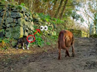 What This Farm Cat Does For His Best Friend, A Blind Dog, Is Truly An Eye-Opener