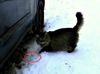 Here's How Masha, The Russian Cat, Saved A Baby From Freezing To Death
