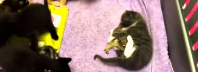 An Orphaned Baby Squirrel Stumbles Into A Mama Cat's Den And What She Does Is Incredibly Amazing