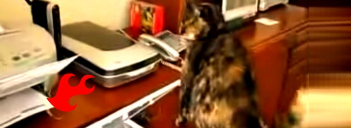 When You See This Cat Reacting To A Laser Printer, You'll Be On The Floor Laughing